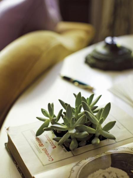 RX-Kyle-Schuneman-First-Apartment-Book-Succulent-Project_blog_lg