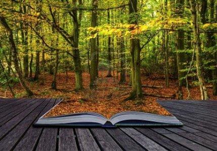 livre+automne