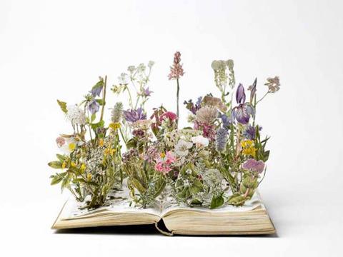 2006-wild-flowers