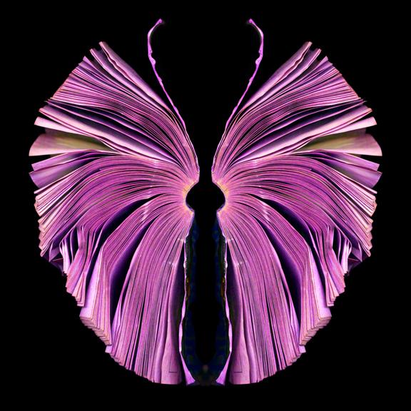pink-butterfly_72.jpg