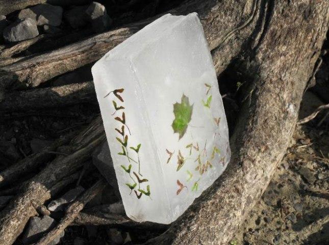 Basia-Irland-carti-gheata-seminte05.jpg