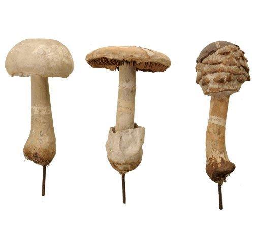 198Auzoux-fungi-set6-Van-Leest-Antiques-1.jpg