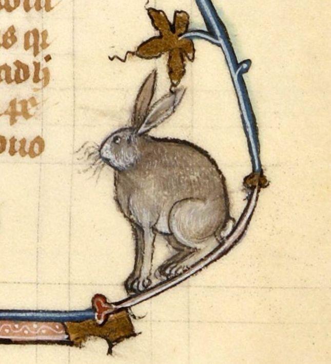67173a87fa60967f15fbb5db217c3868--bunny-art-illuminated-manuscript.jpg