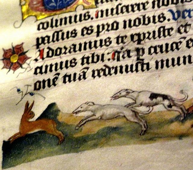 b67bcc3732710e291a9975bac1baae9f--italian-greyhound-medieval-manuscript.jpg
