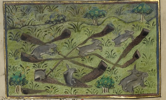 getty+unknown+manuscript+rabbits+enhance+00241601.jpg