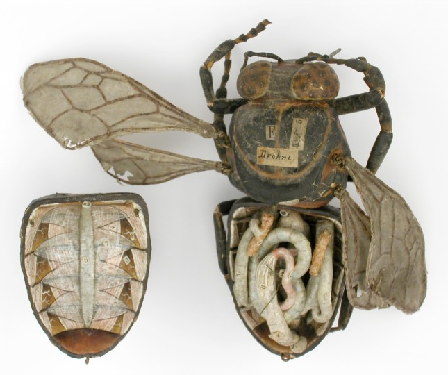 modele-anatomique-docteur-Auzoux-1820-01.jpg