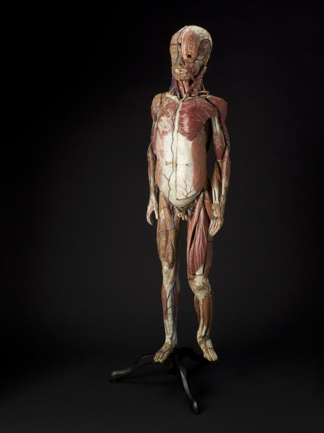modele-anatomique-docteur-Auzoux-1820-07.jpg