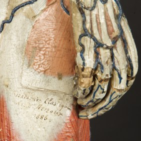 modele-anatomique-docteur-Auzoux-1820-08.jpg