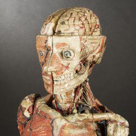 modele-anatomique-docteur-Auzoux-1820-11.jpg