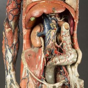 modele-anatomique-docteur-Auzoux-1820-12.jpg