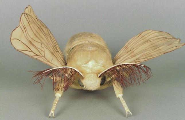 modele-anatomique-docteur-Auzoux-1820-23.jpg
