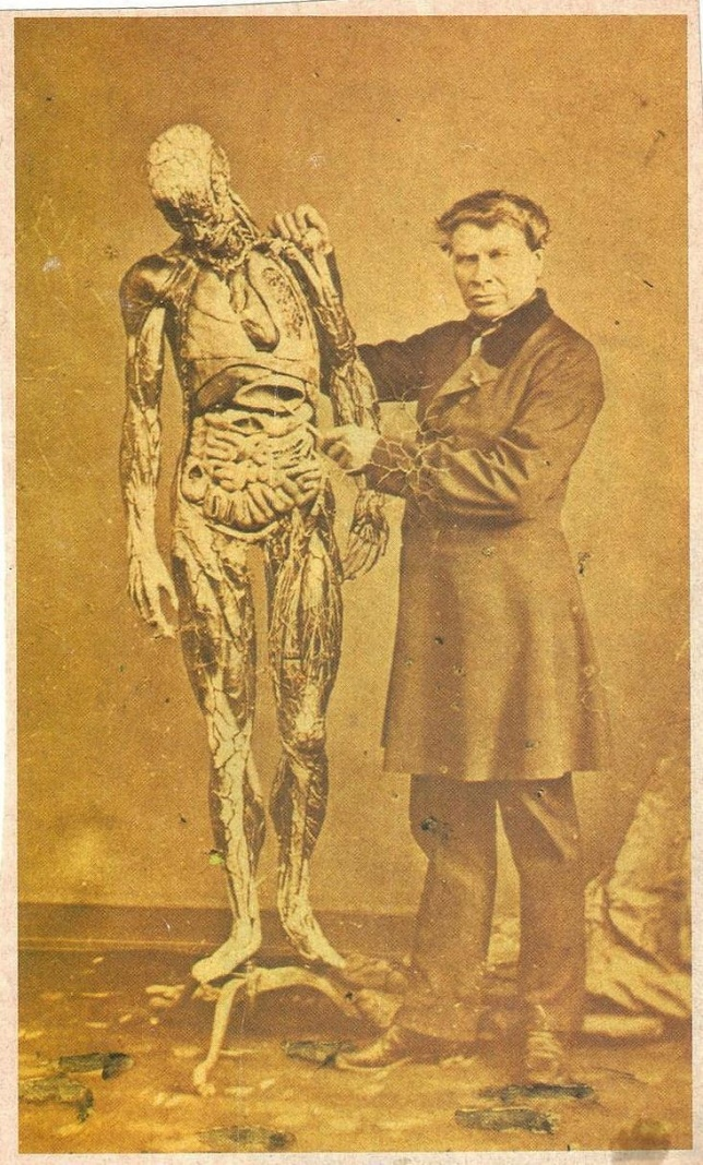 modele-anatomique-docteur-Auzoux-1820-32.jpg